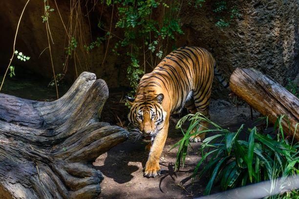 San Diego Zoo | Ingenious Travel